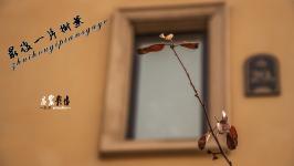 最后一片树叶——庄宸在太原
