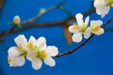 春暖桃花季