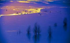 蓝色天鹅湖