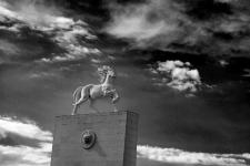 成吉思汗的两匹神马