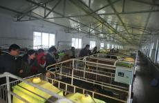 坚守贵州大山创绿色产业
