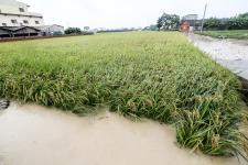 台湾云林豪雨狂炸风强雨大,农民损失严重