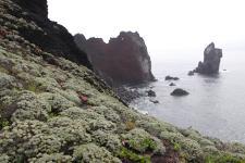 棉花屿全岛皆被火山熔岩给覆盖,海岸为连续的断崖绝壁