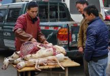 贵阳少数人改不了过冬至吃狗肉的陋习