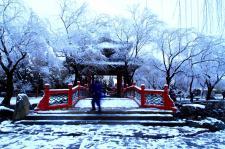 冬日到京城来看雪