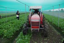 云林县政府已启动预冷、耕锄、促销等措施应对菜价低迷