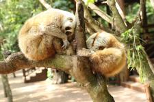 """【美丽中国长江行】北回归线上的""""动物乐园""""与""""森林王国"""