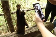 """【美丽中国长江行】北回归线上的""""动物乐园""""与""""森林王国"""""""