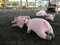 桃园市率各县市举办防范非洲猪瘟防疫演习