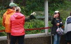 大陆赠送高雄一对大熊猫引游人驻足